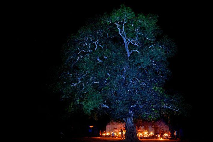 Dorfbewohner veranstalten ihren Abendmarkt unter einem Baum im Dorf Kokahoue in Benin. Die 300 Dorfbewohner leben ...