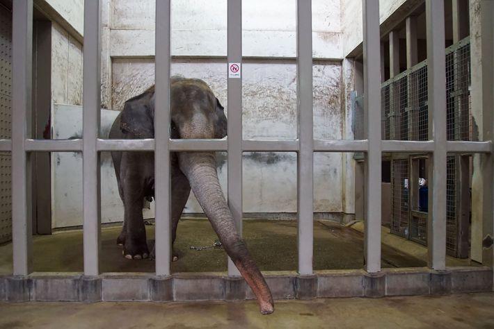 Sunny ist seit 28 Jahren allein in ihrem Gehege im Zoologischen Garten von Ishikawa.
