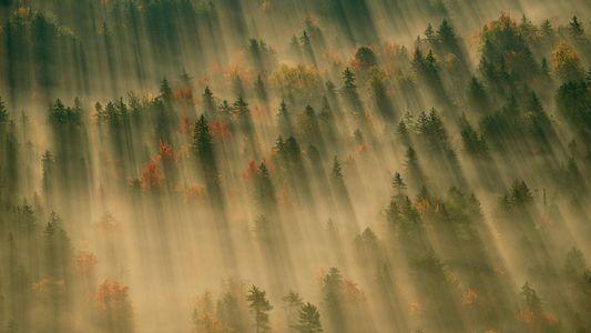 Prachtvolle Bilder zum Herbstanfang