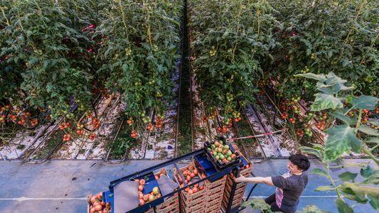 Wie ernähren wir die Welt, ohne den Planeten zu zerstören?