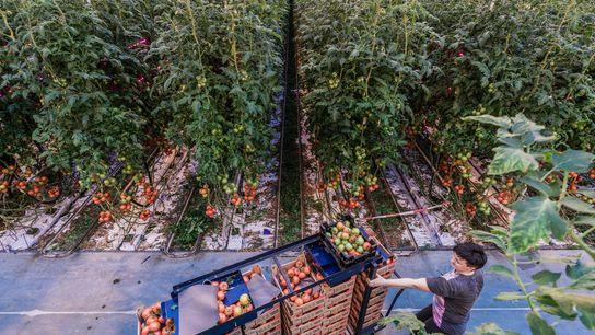 Ein Bericht des WRI listet Lösungen auf, die einer wachsenden Weltbevölkerung eine gesunde Ernährung ermöglichen und ...
