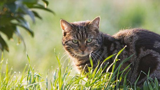 Sie sehen vielleicht süß aus. Aber der Killerinstinkt von Katzen könnte einer neuen Studie zufolge ganzen ...
