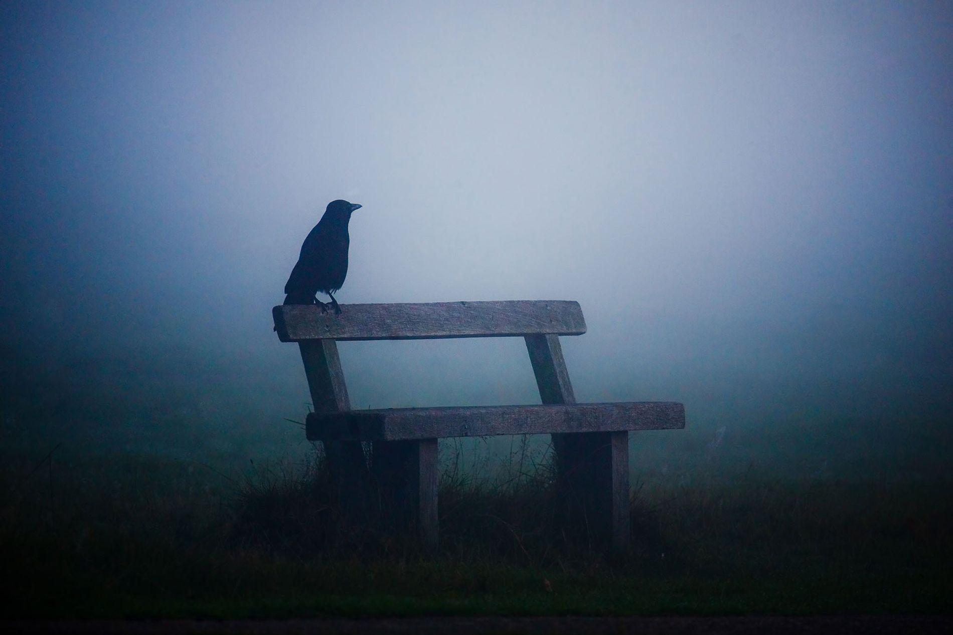 Krähe im Nebel