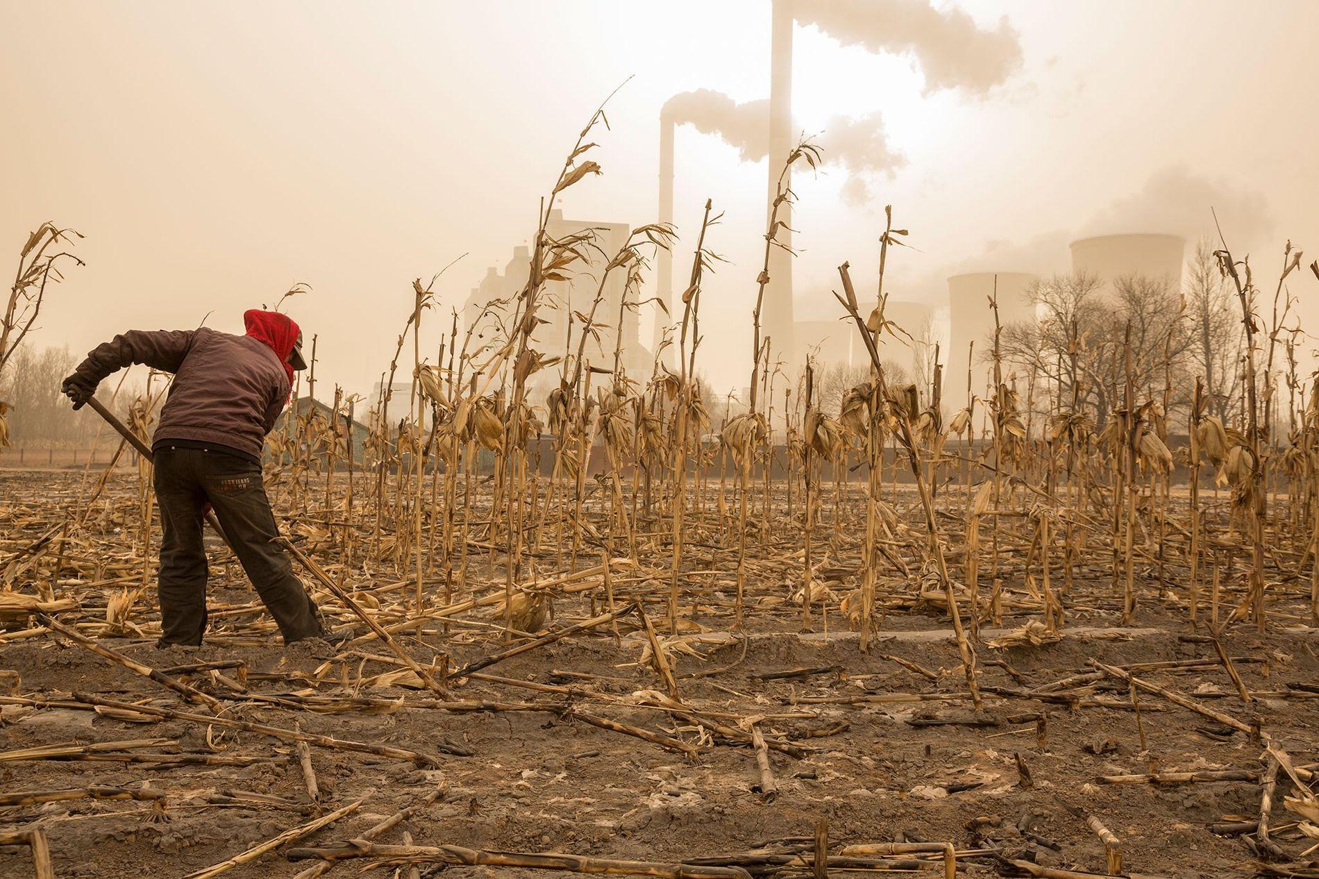 Ein Bauer bereitet sich in der Nähe eines Kohlekraftwerks in der chinesischen Provinz Shanxi auf den Frühling vor. Das Kraftwerk versorgt das 320 Kilometer entfernte Peking mit Strom und die lokalen Felder, Ernten und Menschen in seiner Umgebung mit Ruß.