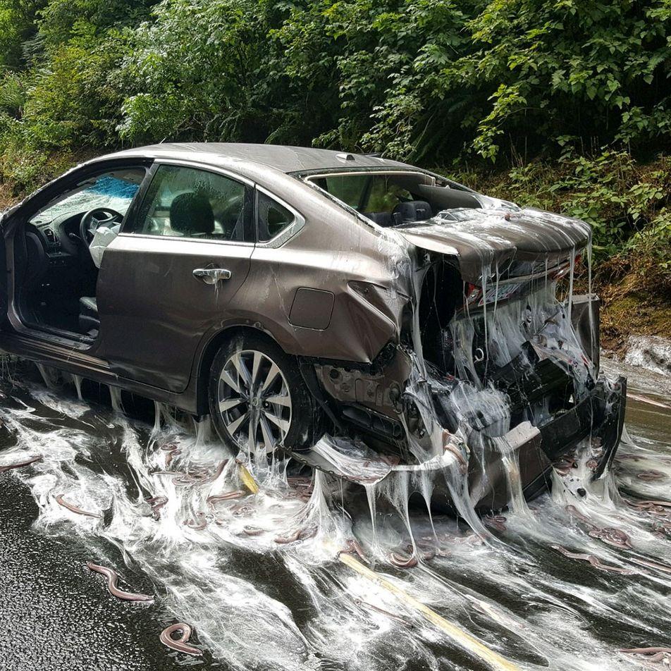 Bizarrer Verkehrsunfall: Schleimaale verschleimen Straße