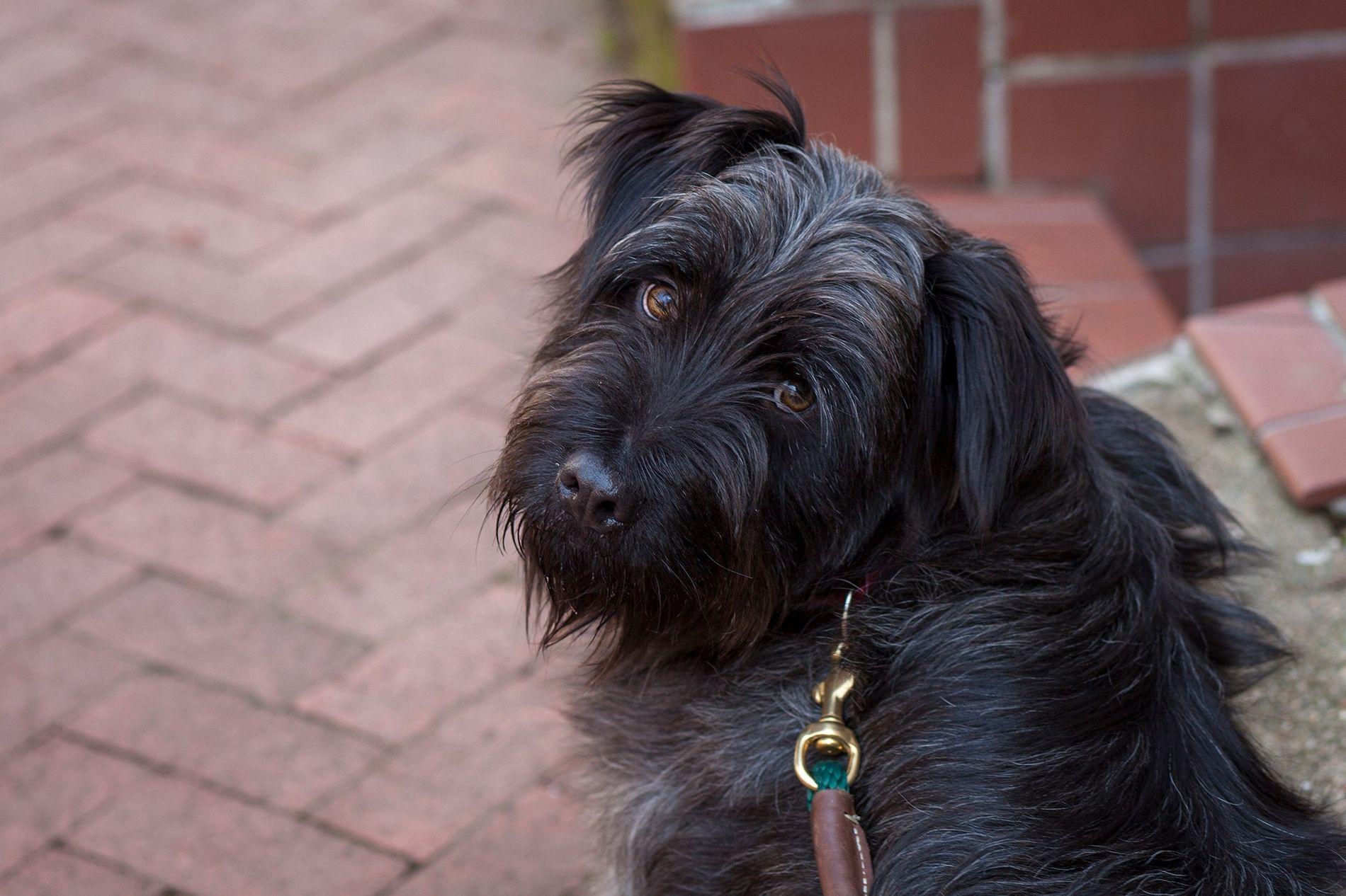 In den USA werden schätzungsweise 70 Millionen Hunde als Haustiere gehalten. Hier zu sehen ist ein Mischling aus einem Tierheim.