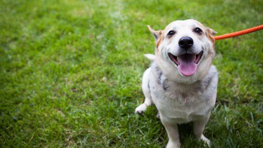 Von Feind zu Freund: Wie Hunde und Pferde kommunizieren