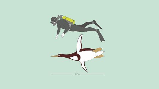 Urzeitlicher Pinguin war so groß wie ein Mensch