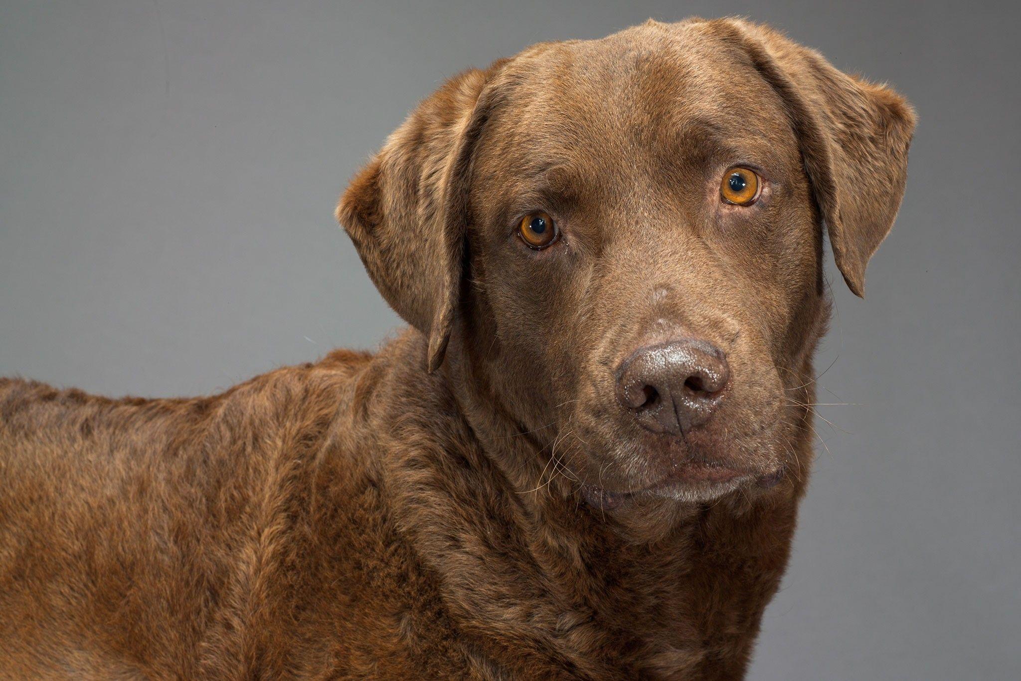 Jahrhunderte der Zucht veränderten das Hundegehirn | National Geographic
