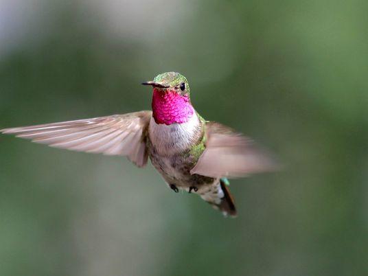 Kolibris sehen Farben, die wir uns nicht mal vorstellen können