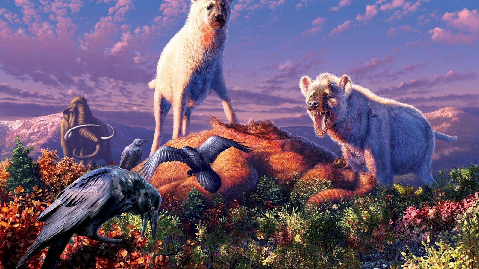 Fossilien von Hyänen der ausgestorbenen Gattung Chasmaporthetes, die hier in einer Illustration abgebildet sind, wurden erstmals ...