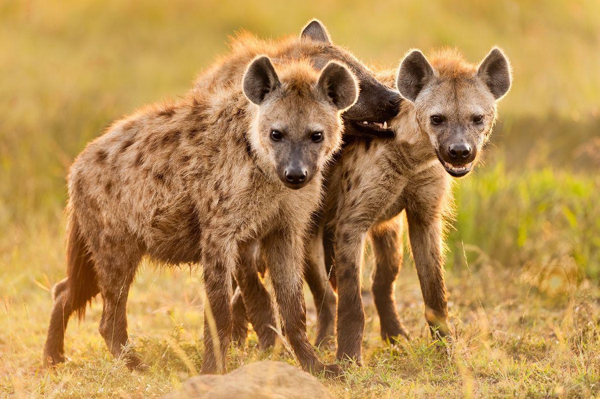 Zu Unrecht verunglimpft: Afrikas erfolgreichste Jäger