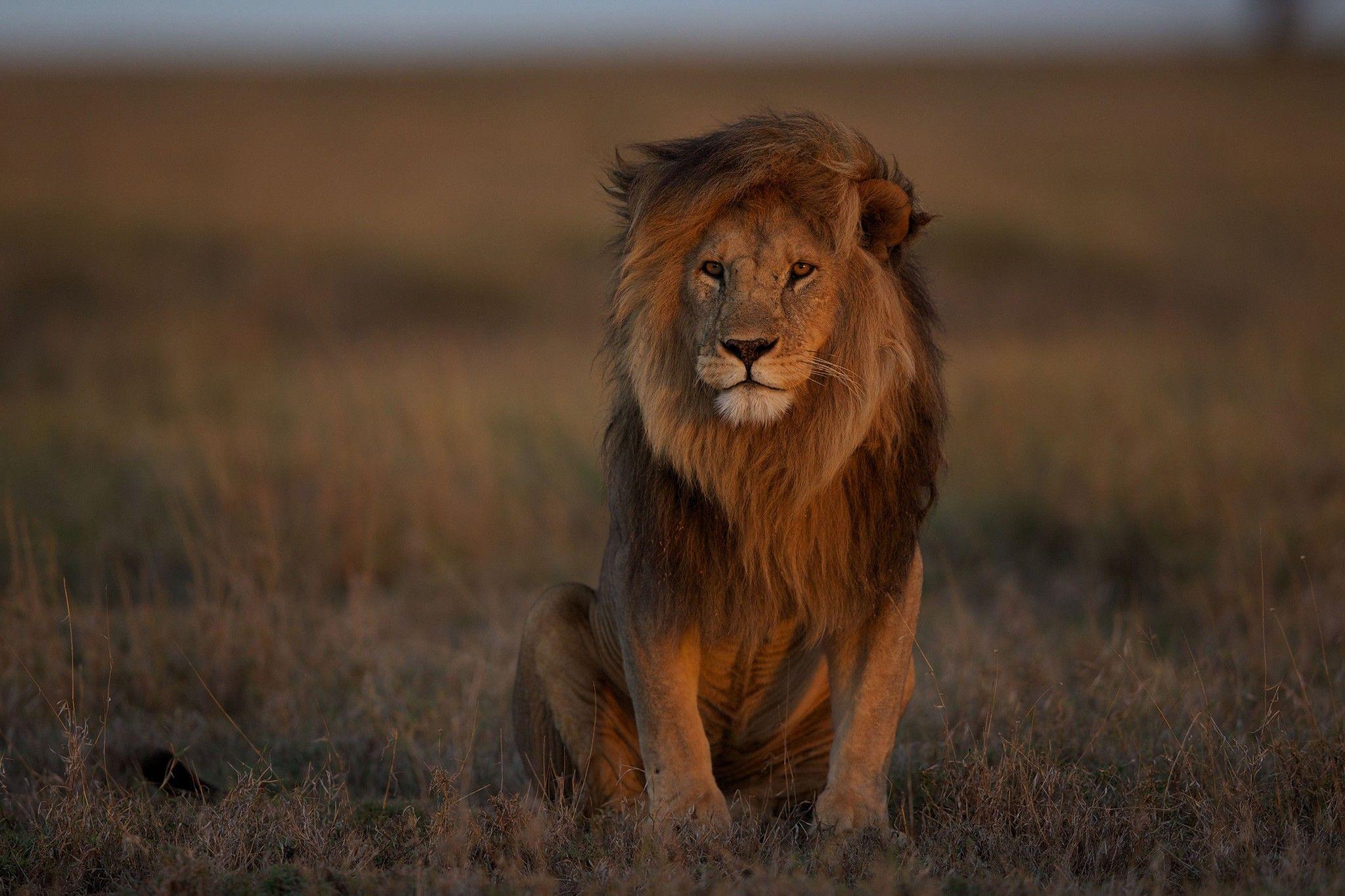 Das stille Sterben der Löwen | National Geographic