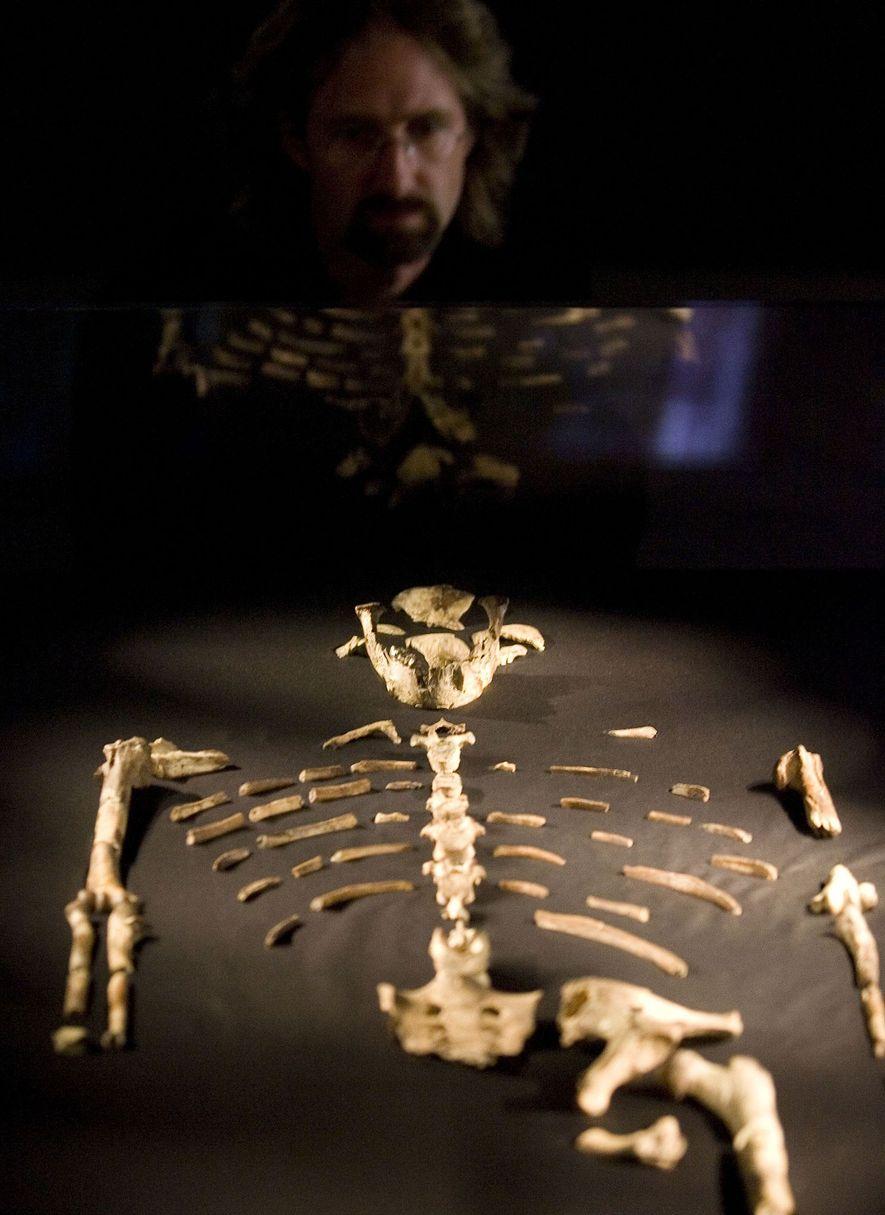 Ein Besucher am Houston Museum of Natural Science sieht sich die Knochen von Lucy bei einer ...