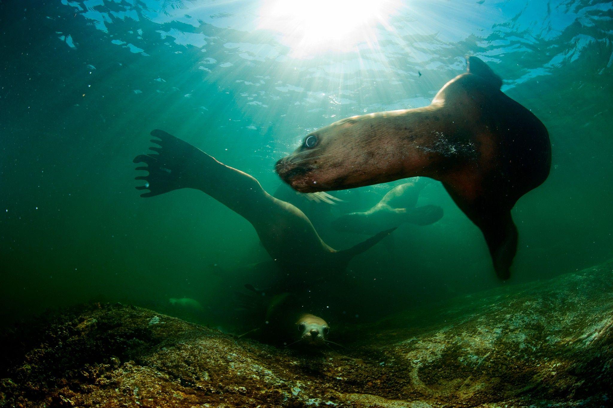 Tödliches Virus breitet sich unter den Tieren der Arktis aus