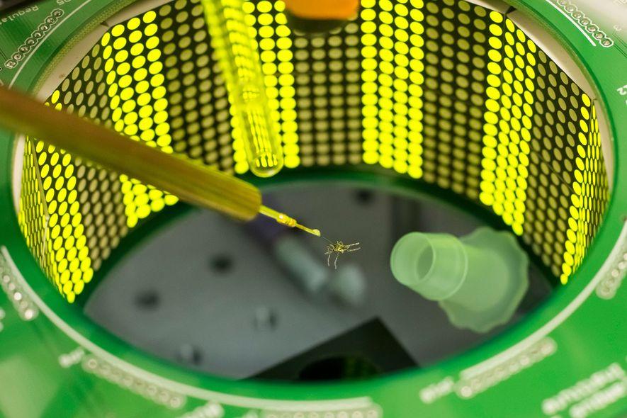 Die Wissenschaftler haben im Labor die Reaktion von Mücken auf Gerüche untersucht, nachdem sie Vibrationen ausgesetzt ...