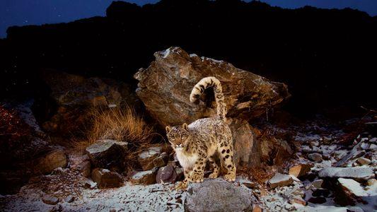 Hohe Kunst: Wie Tiere in extremen Bergregionen überleben