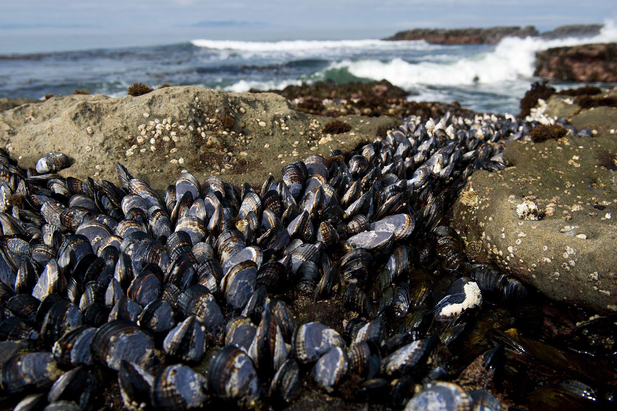Ansteckende Krebsarten bei Meerestieren geben Rätsel auf