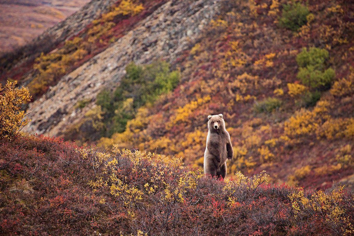 Galerie | Herbststimmung: 15 Impressionen aus den leuchtenden Wäldern