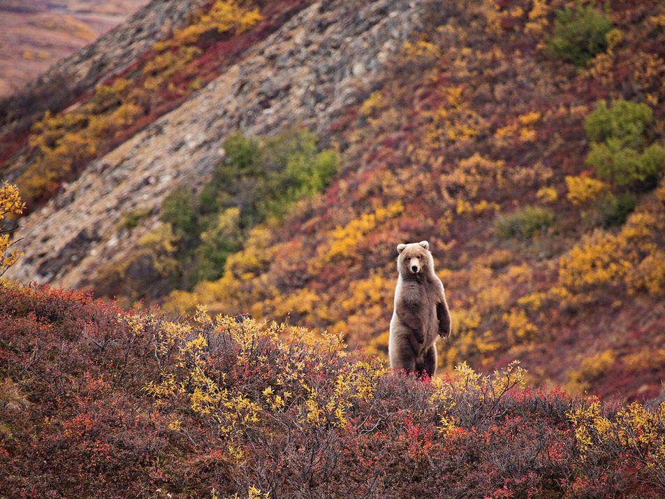 Herbststimmung: 15 Impressionen aus den leuchtenden Wäldern
