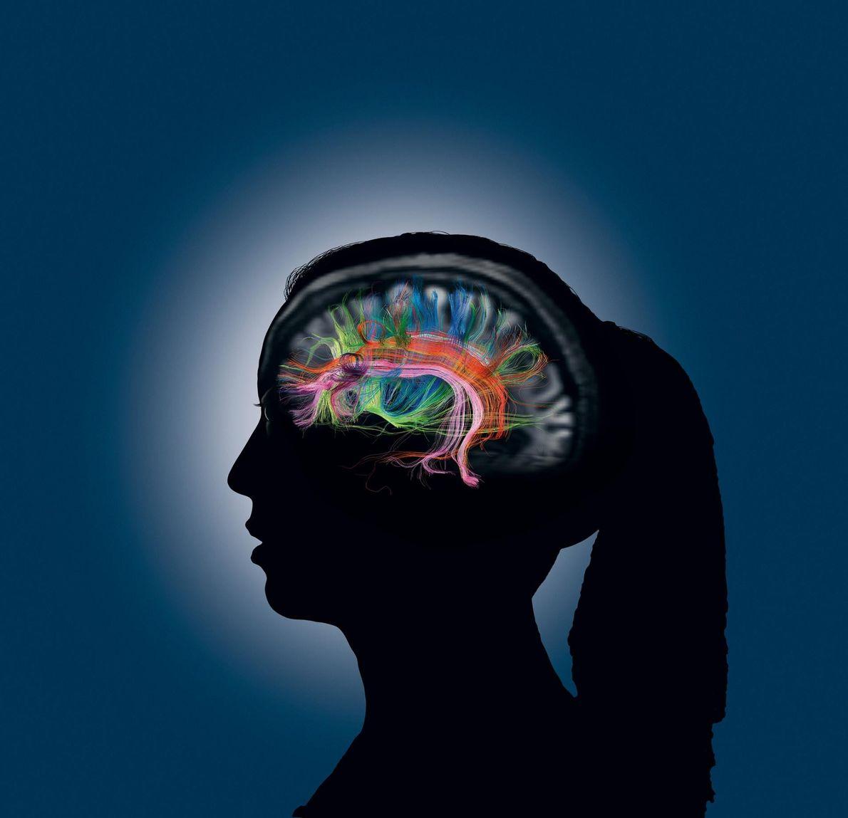 Wenn wir auf unser Gedächtnis zugreifen, kommunizieren verschiedene Teile des Gehirns miteinander, die hier durch die ...