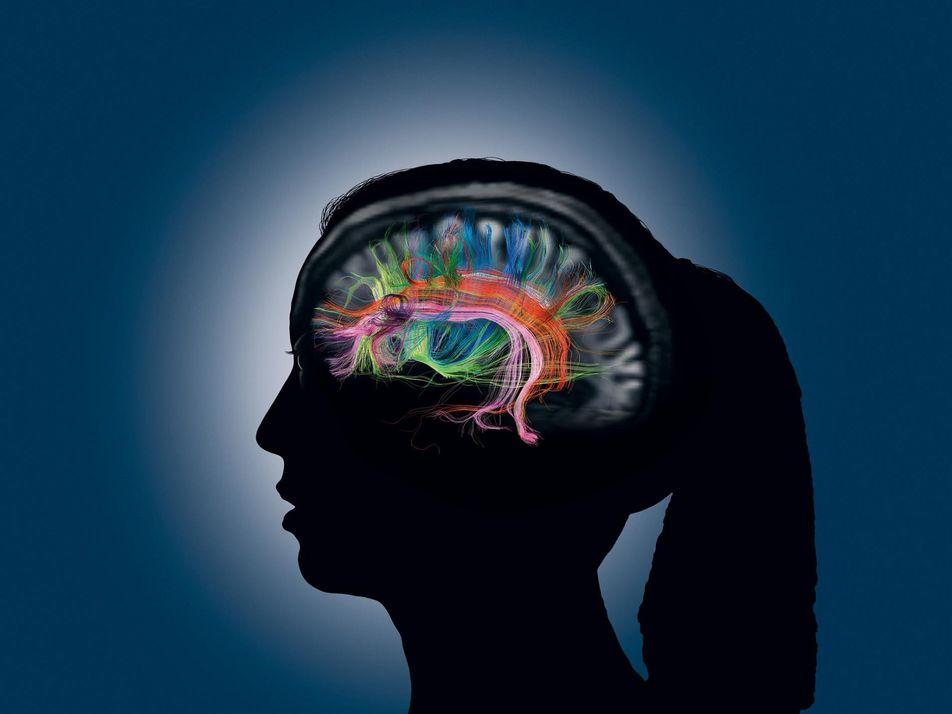 Das Gedächtnis: So formen und vergessen wir Erinnerungen