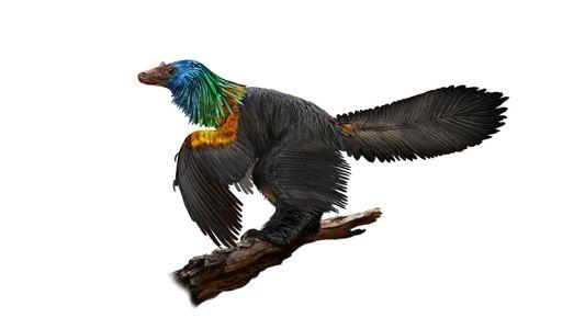 """Neuer """"Regenbogensaurier"""" schillerte wahrscheinlich wie ein Kolibri"""