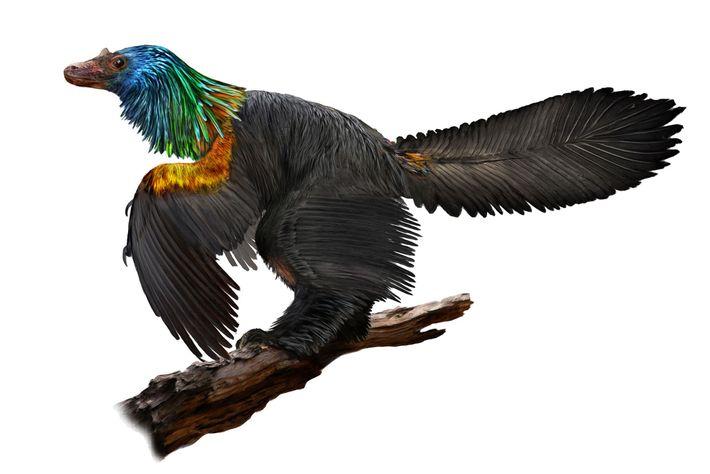 Eine künstlerische Darstellung des Caihong juji, eines Theropoden, der vor 160 Millionen Jahren im Nordosten des ...