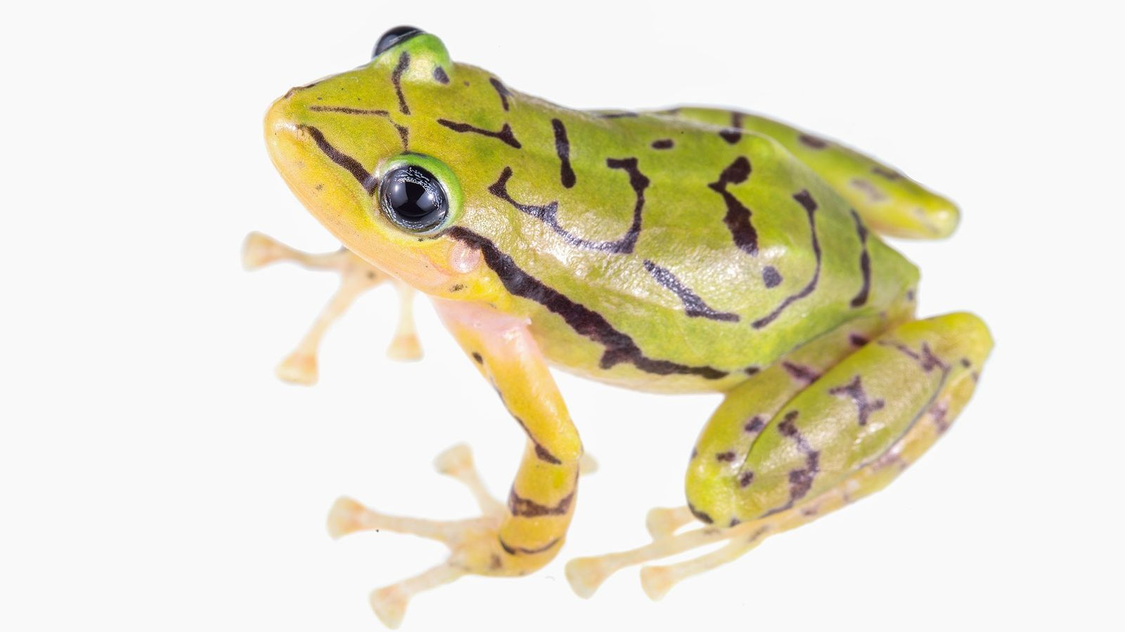 01-new-frog-species-ecuador