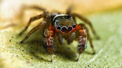50 neue Spinnenarten in Australien entdeckt