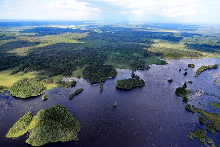 Züricher Studie: Bäumepflanzen ist der beste Klimaschutz