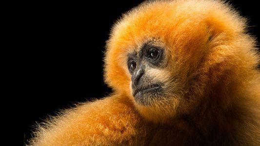 Galerie: Diese 50 Tierarten sind in Gefahr
