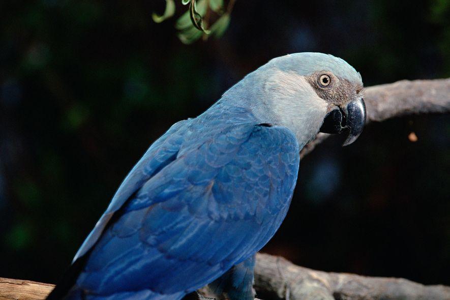 Diese 8 Vogelarten sind im letzten Jahrzehnt verschwunden