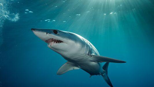 Galerie: 6 Haie, die ihr (vielleicht) noch nicht kennt