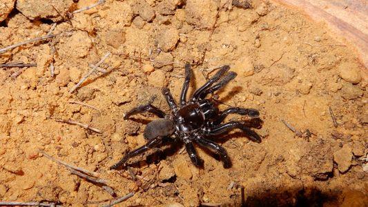 Älteste bekannte Spinne starb mit einer Lektion für uns