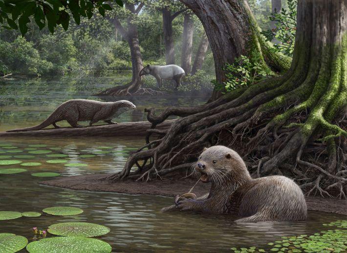Der Riesenotter Siamogale melilutra machte in den Feuchtgebieten im heutigen Südwesten Chinas Jagd auf Beute.