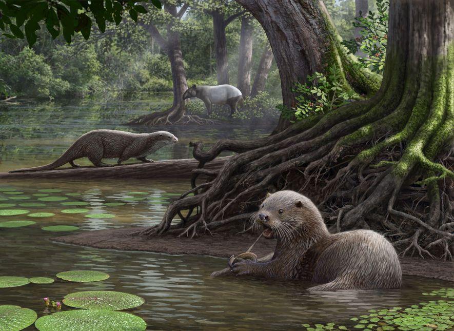 Prähistorischer wolfsgroßer Otter hatte erstaunlich starken Biss