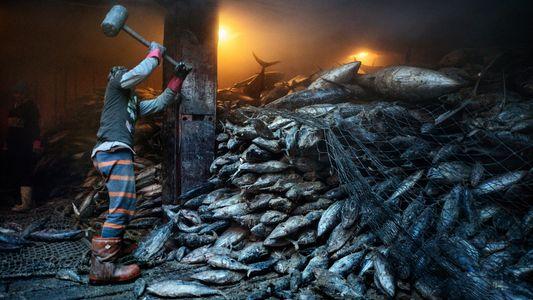 Dem Meer gehen die Fische aus