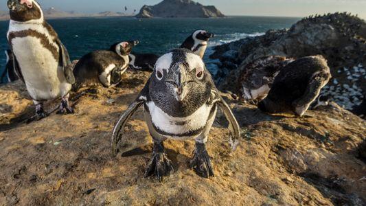 Smarte Vögel: Wie intelligent sind eigentlich Pinguine?