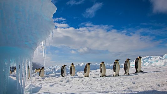 Bipolare Mythen: Am Südpol gibt's keine Pinguine