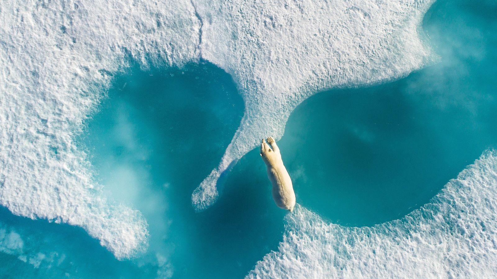 Ein Eisbär überquert das Eis in Arctic Bay, Nunavut, Kanada. Als der Fotograf diese Aufnahme machte, ...
