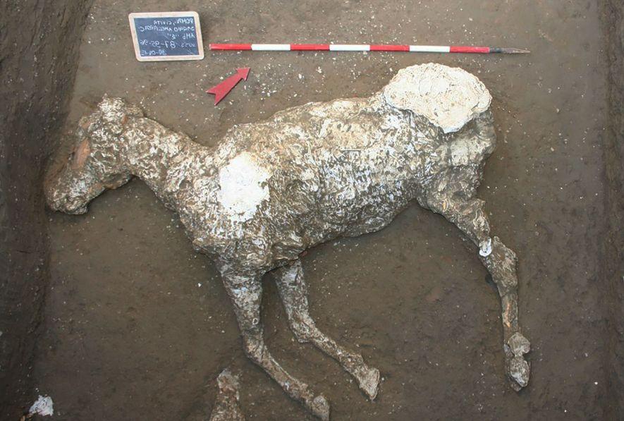 Die Pferde von Pompeji: Beim Fluchtversuch verschüttet?