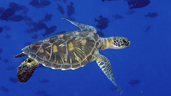 Meeresbewohner