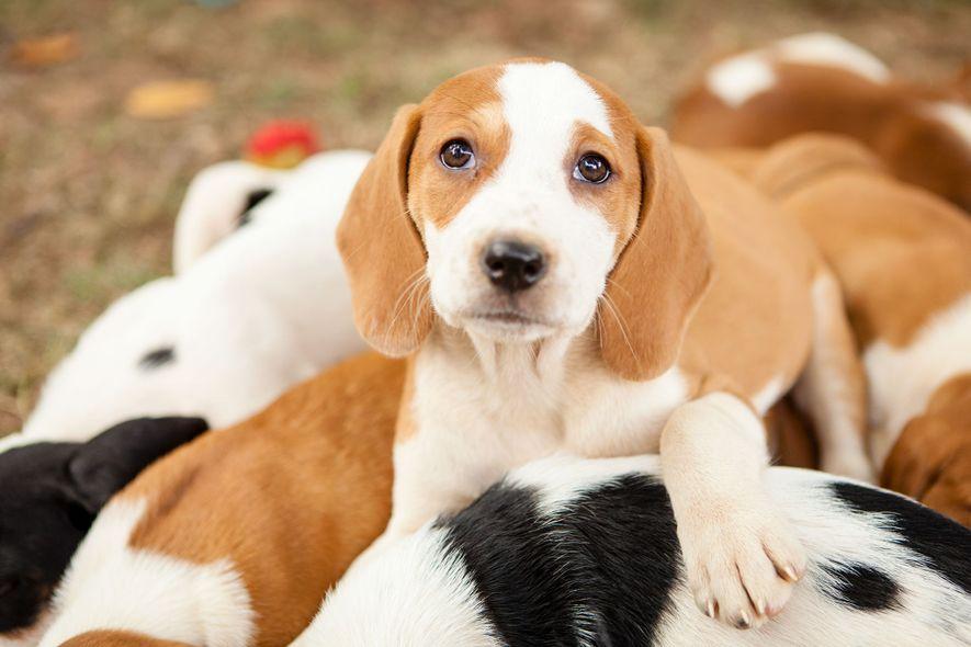 Wissenschaftlich belegt: In diesem Alter sind Hundewelpen am süßesten