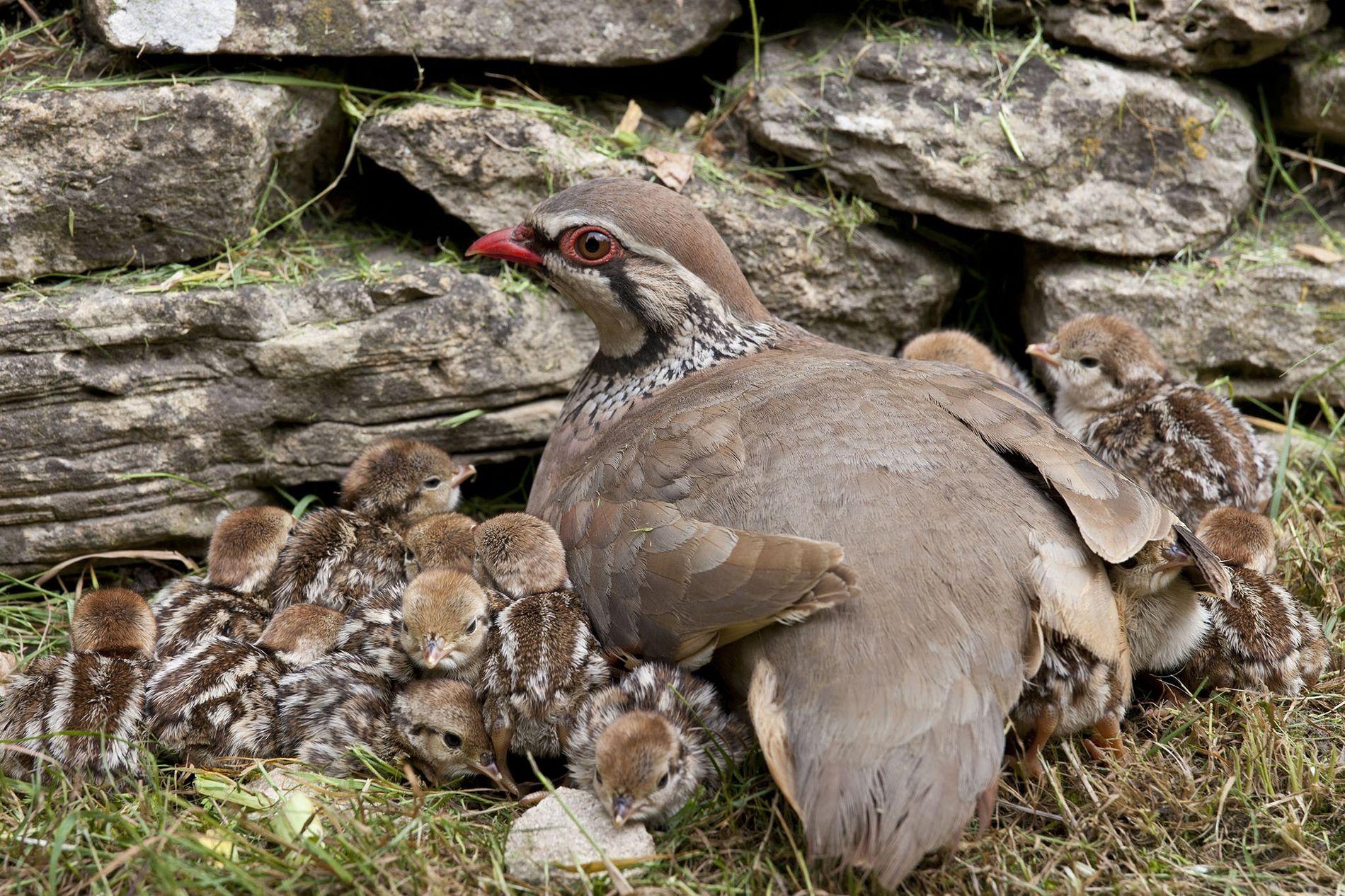 Die Populationen von Vogelarten, die auf oder in der Nähe von Feldern leben – hier abgebildet ...