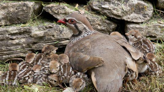 Stille Felder: Weltweit stürzen die Feldvogel-Populationen ein