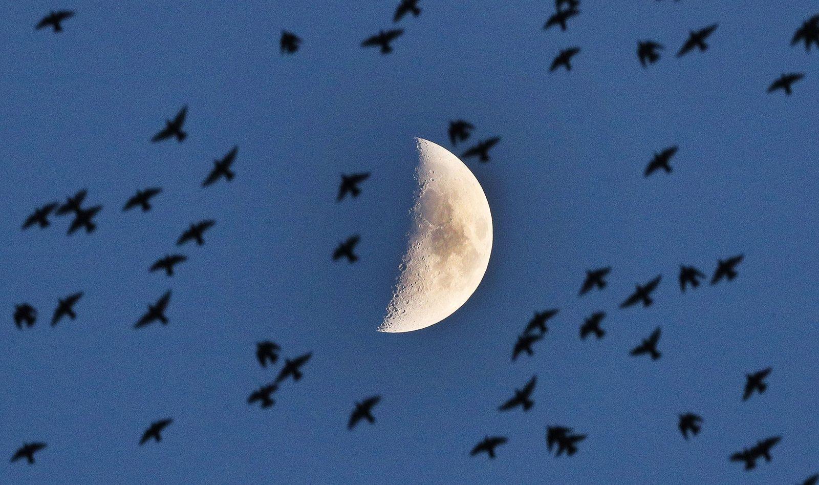 Faszination Mond