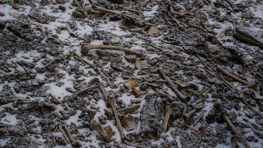 """DNA-Studie vertieft Mysterium des """"Knochensees"""" im Himalaya"""