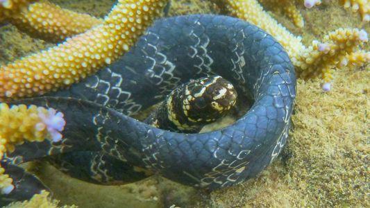 Verschmutzung färbt Seeschlangen schwarz