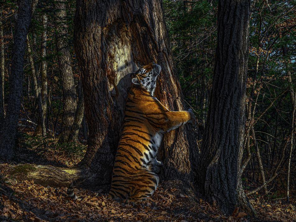 Die besten Wildtierfotos 2020